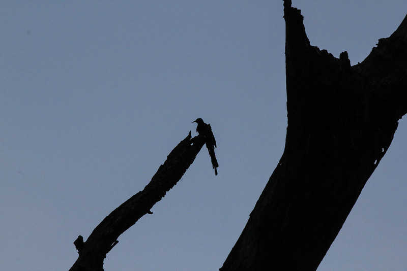 'Bird in Paradise' - A silhouette of a bird under the blue Zimbabwean sky reiterates what it's all about.