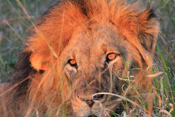 Zimbabwe_SouthAfrica