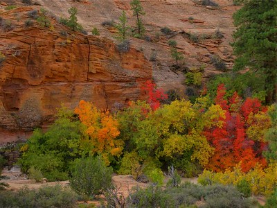 Zion, Bryce, De Chelly - Oct 2008