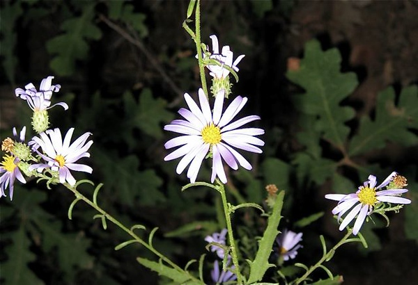Wildflowers, Zion National Park