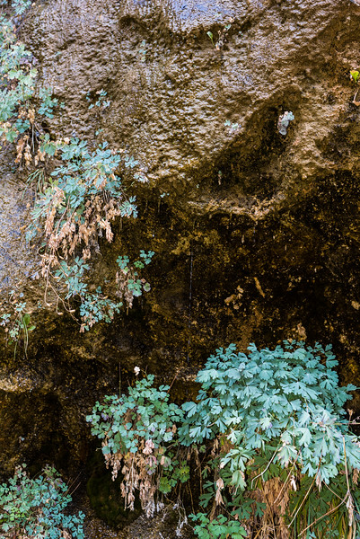 Plants on the weeping wall