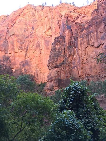 Riverside Walk in Zion NP