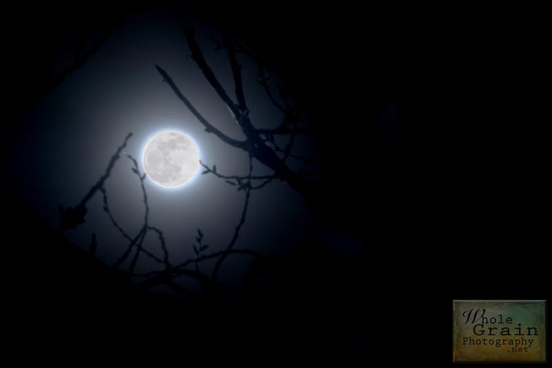 20091231_Moon_3735tc