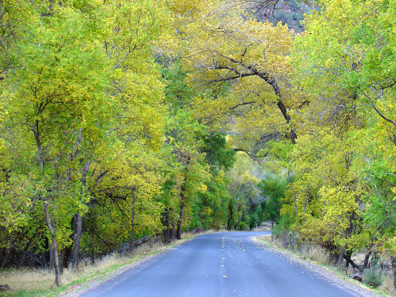 The road leading upto the trailhead