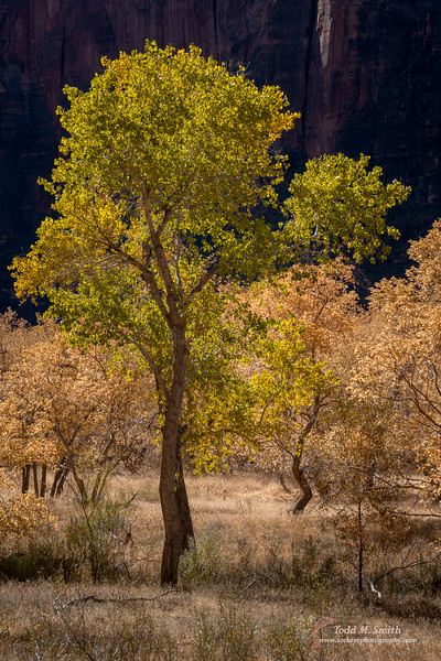 As the sun continued to rise, the cottonwoods nearby became backlit.