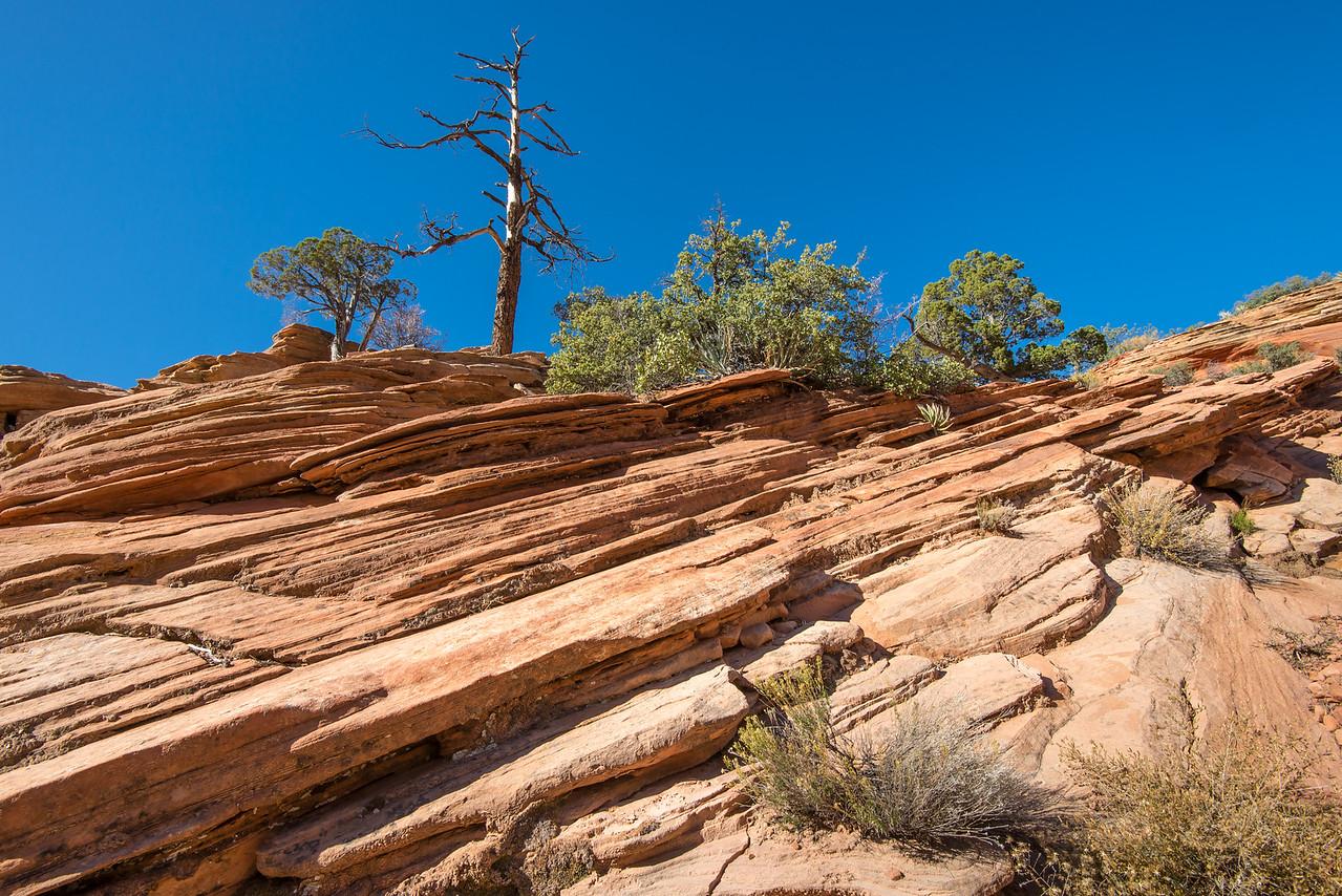 Zion National Park, UT - November 2014