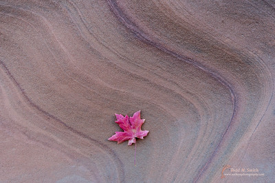 In many places, the sandstone of Zion has interesting lines and shapes.