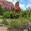 Virgin River - Zion Canyon