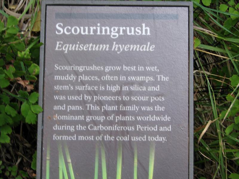 Scouringrush