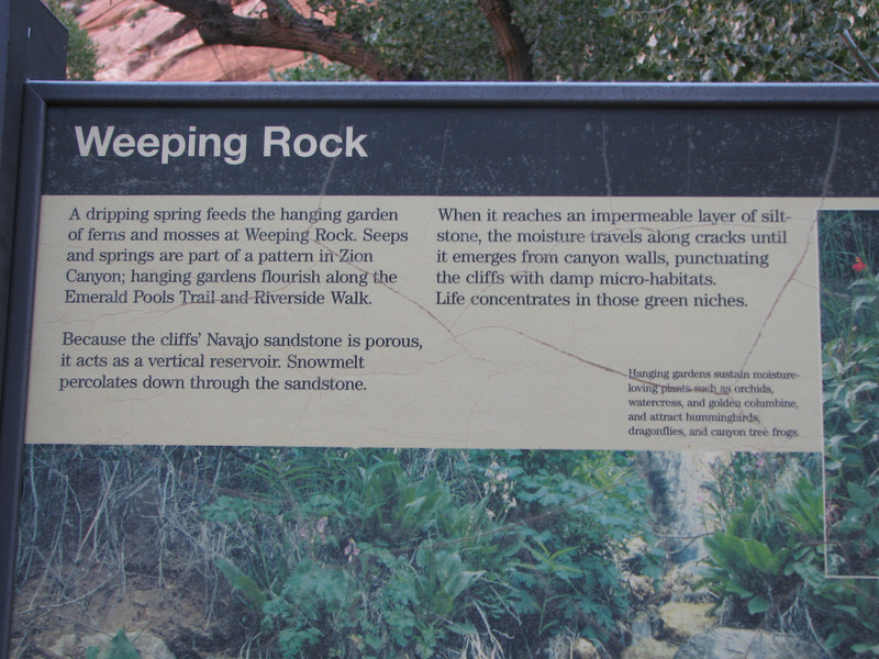 A quick shuttle ride to the Weeping Rock trailhead.