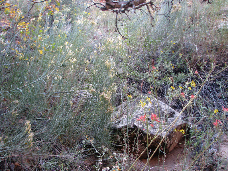 Many of the shrubs are in boom and of easy reach.