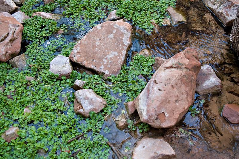 Wetland on the Valley Floor
