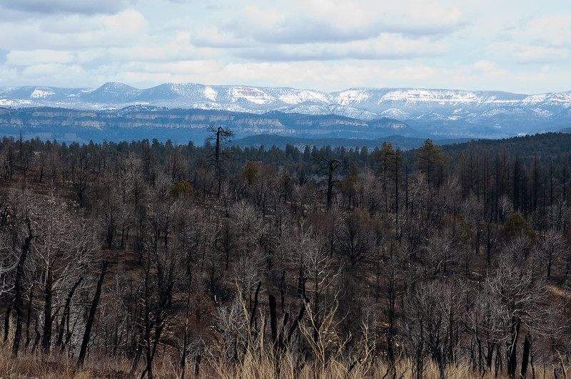 Fire Scars on the East Rim-0488