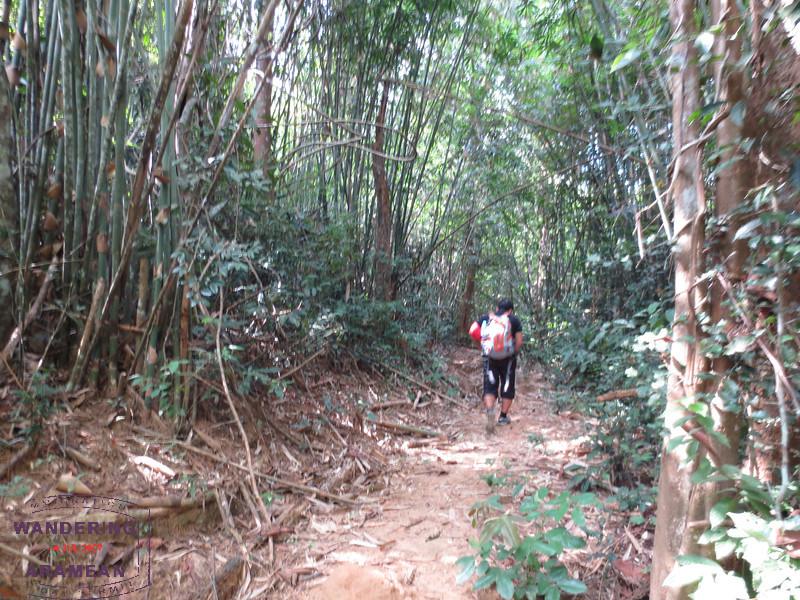 Hiking up through the bamboo to the top of the zipline trail.