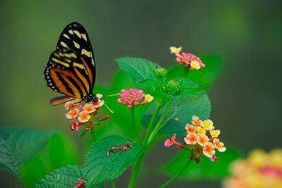 Butterfly exhibit - San Antonio Zoo