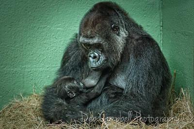 Machi nursing baby boy Ubuntu