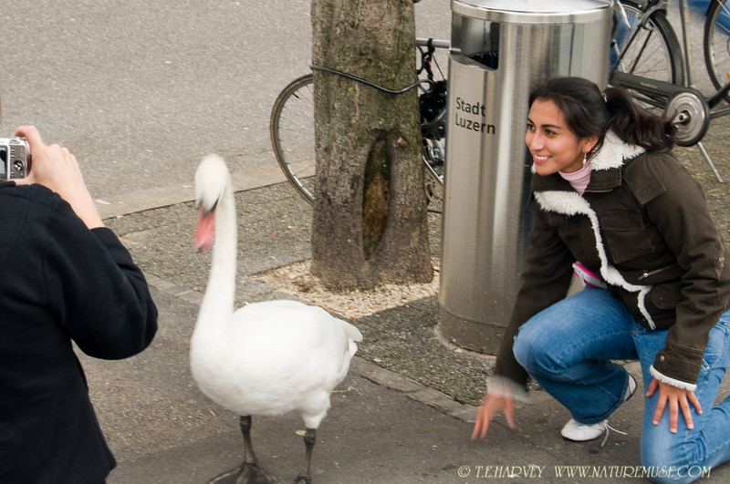 Lucerne Lady and The Swan.  Shot this photo when the boy was taking a photo of the swan with his girlfriend in Lucerne, Switzerland.