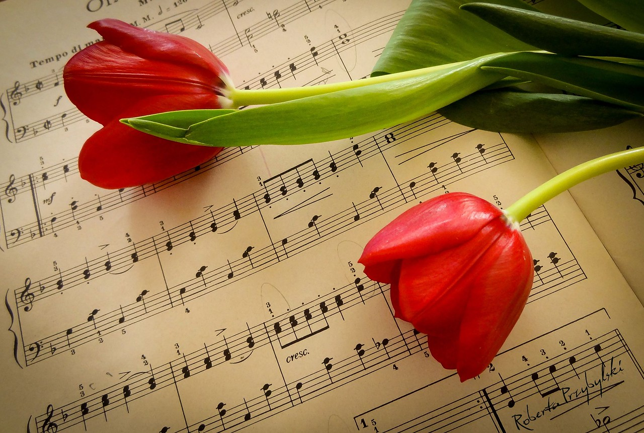 this is a musical tulip