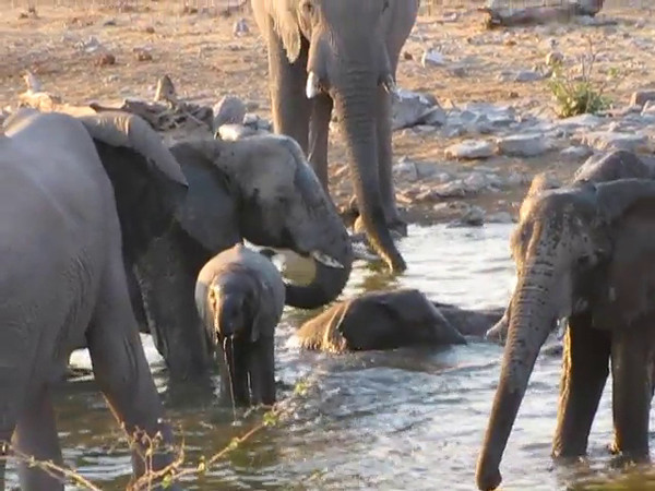 Elephants bathing at the Halali Water Hole, Etosha National Park, Namibia.