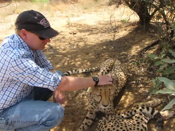 Cheetah encounter at N/a'an ku sê Wildlife Sanctuary. You can hear the cheetahs purring loudly in this video.