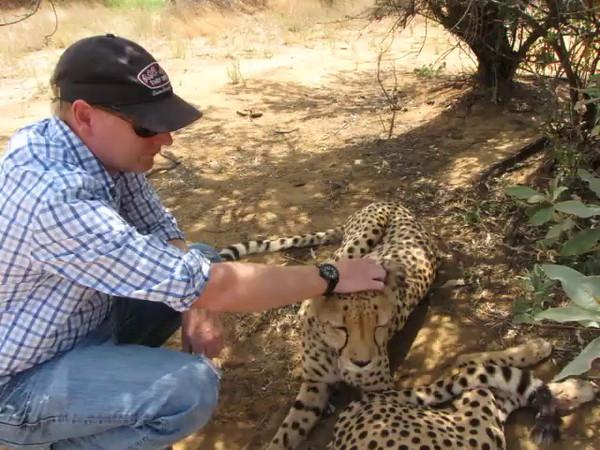Cheetah encounter at N/a'an ku sê Wildlife Sanctuary. You can hear the cheetahs purring loudly in this video.