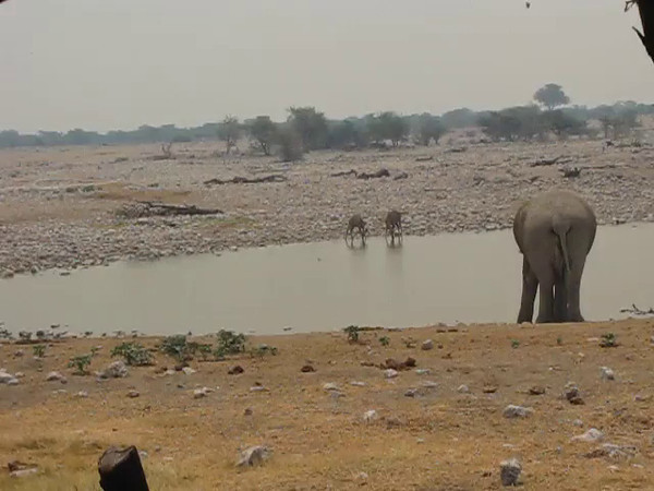 Elephants and other wildlife at the Okaukuejo Water Hole in Etosha National Park, Namibia.