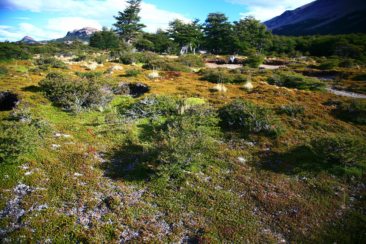 Otherworldly meadow in the park on our hike.