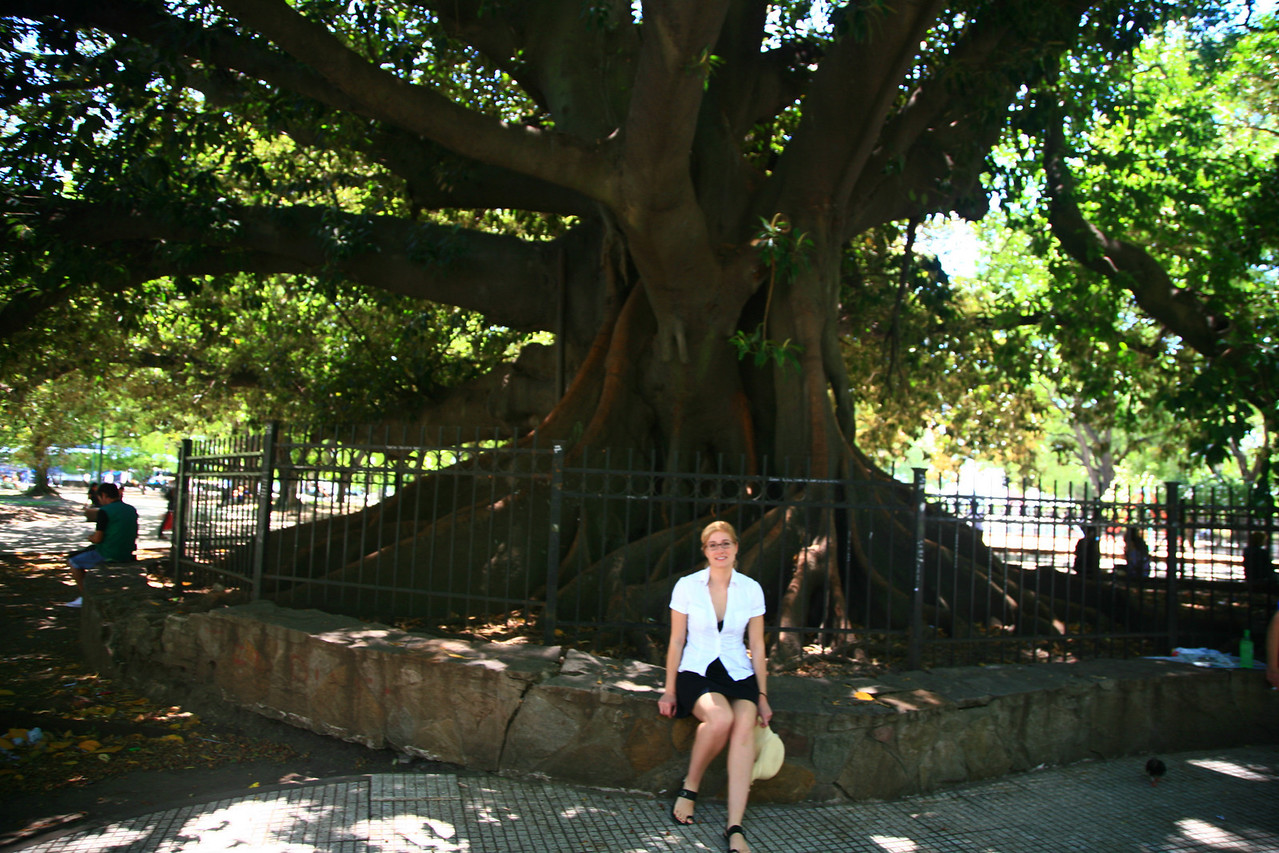 200-year old rubber tree in the San Martin park next to our hotel in Buenos Aires.