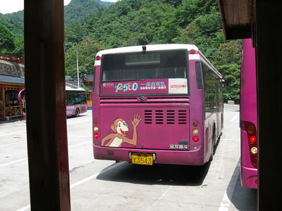 Purple Buses of Doom