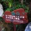 Day 8: Zhang Jiajie Park  - 099