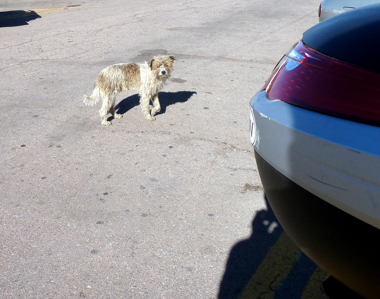 Scruffy Mexican parking lot dog. Kinda cute.