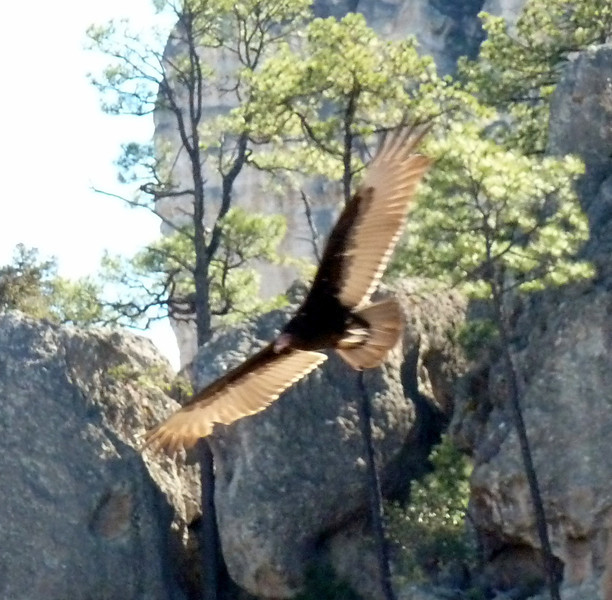 Hawk?
