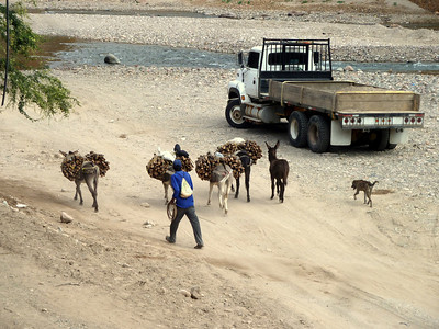 Dude with his firewood-carrying donkeys along the river in Creel.