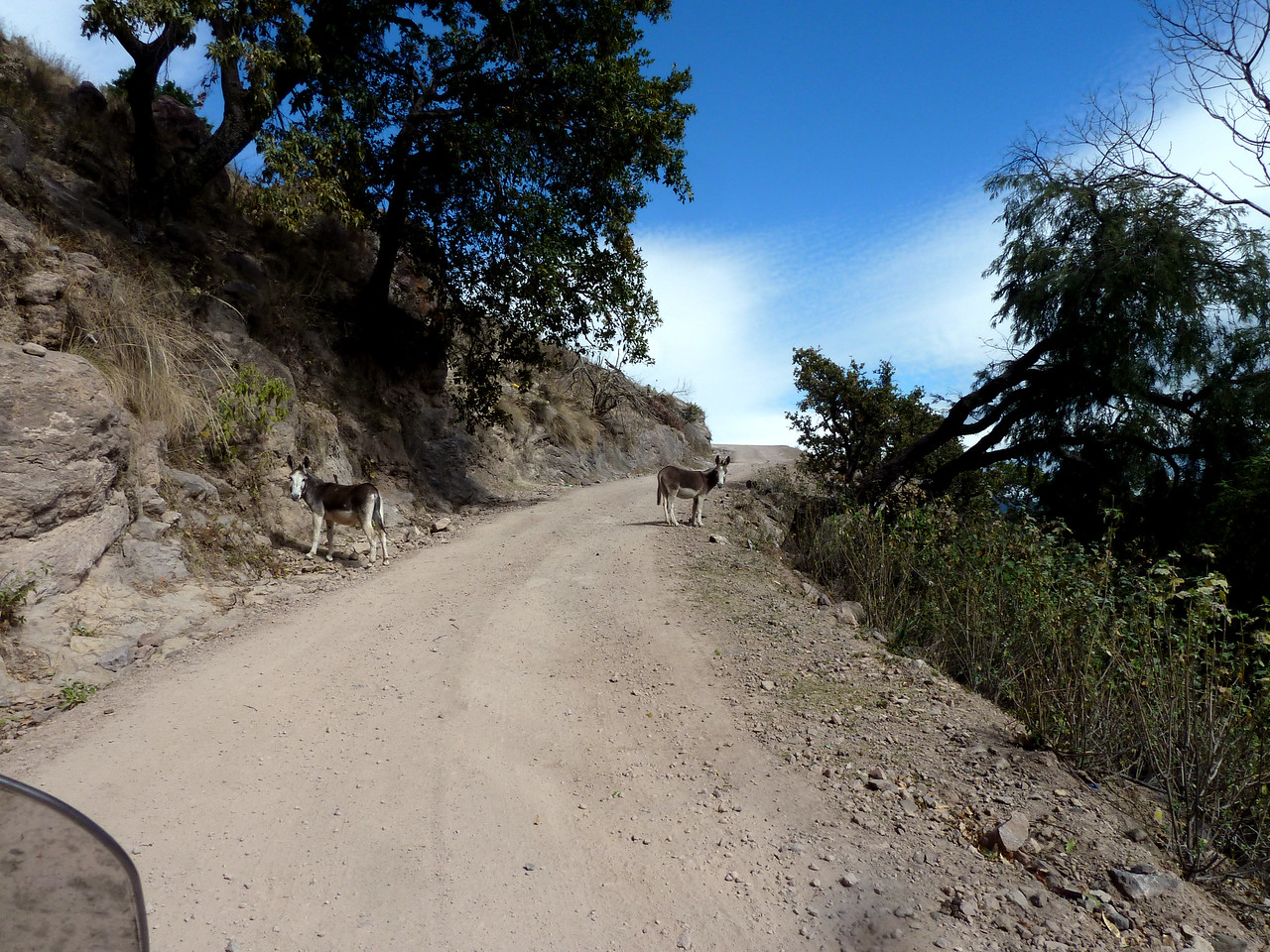 Burros along the switchbacks.