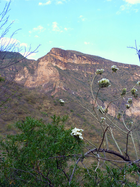 Flowers and canyon wall.