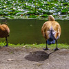 Original Animal Synchronicity Photography 30 By Messagez com
