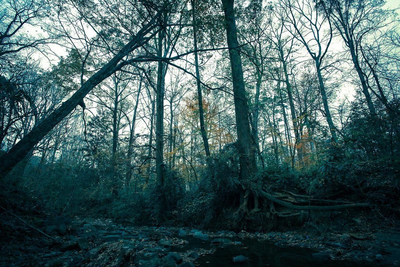 Lullwater Park | Atlanta, Georgia