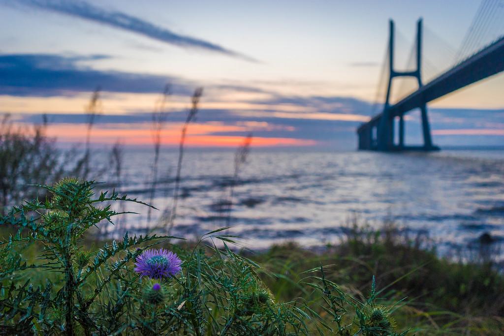 Lisbon Vasco da Gama Bridge at Sunrise Photography 2 By Messagez com