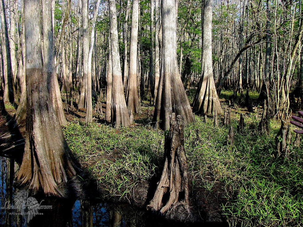 Cypress Forest, Florida