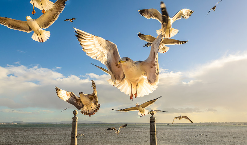 Lisbon Seagulls Synchronicity Fine Art Photography 3 By Messagez com