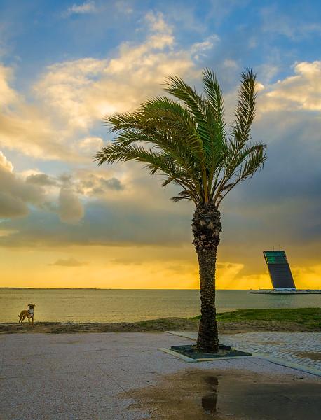 Amazing Dog Lisbon Sunset Fine Art Photography By Messagez com