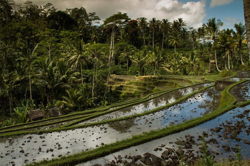 Bali_1011.jpg