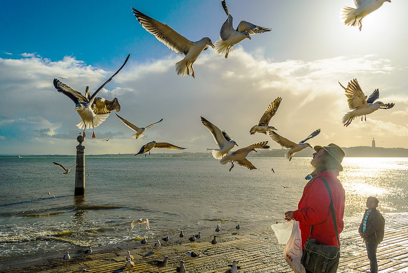 Lisbon Bird Whisperer Fine Art Photograhy 5 By Messagez com