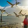 Lisbon Bird Whisperer Fine Art Photograhy 5 By Messagez com