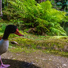 Original Animal Synchronicity Photography 31 By Messagez com