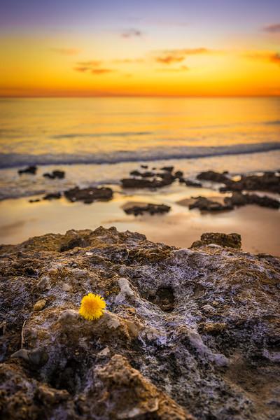 Best of Lisbon Beaches at Sunset Photography 59 By Messagez com