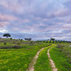 Original Alentejo Pathway Photography 2 Messagez com