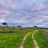 Original Alentejo Pathway Photography 2 Messagez com