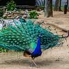 Original Animal Synchronicity Photography 7 By Messagez com