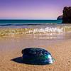 Best of Portugal Arrabida Beach Photography 9 By Messagez com